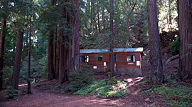 Forest & Meadow View Cabins