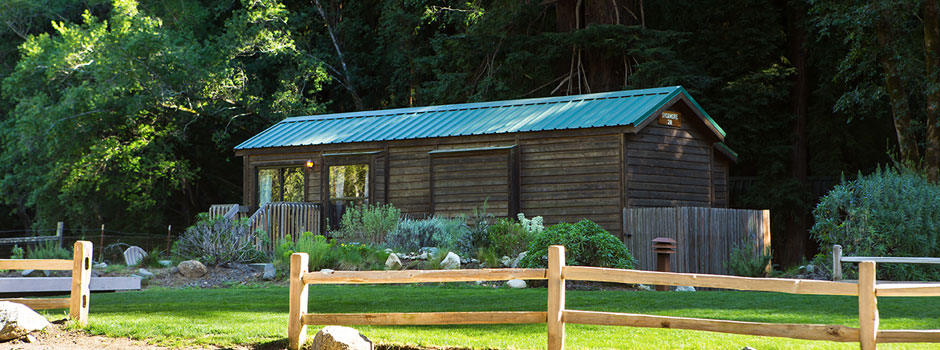 Forest and Meadow View Cabins